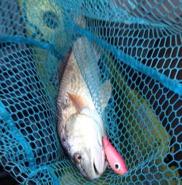 Corky Redfish