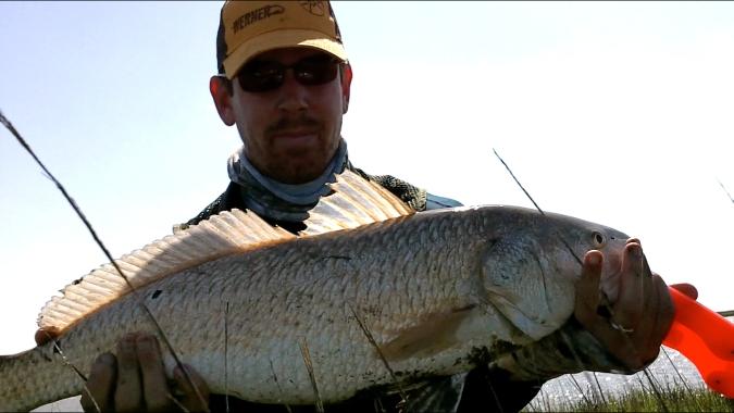 Fat Redfish
